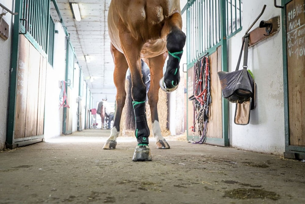 cold water horse therapy boots O´Cool